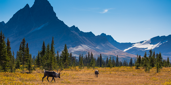 Jasper National Park, Alberta - credit: Parks Canada/Ryan Bray