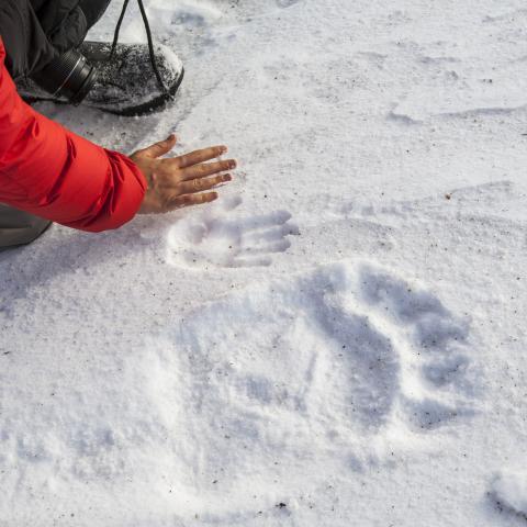 A polar bear handprint in Nunavut