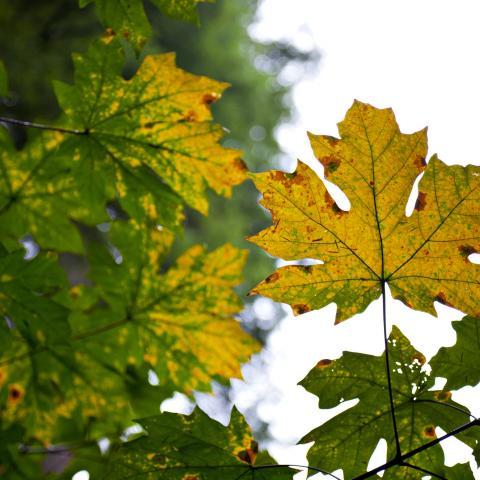 Les couleurs de l'automne en Colombie-Britannique