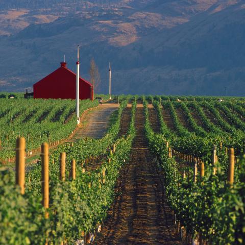 Okanagan Kelowna Winery Restaurants