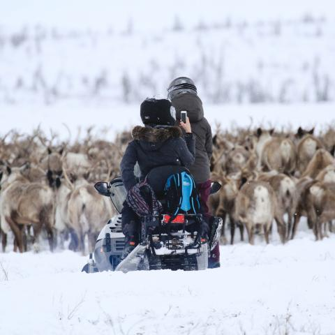 Canadian Arctic Reindeer Signature Package