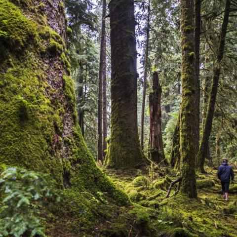 walking through forest in British Columbia