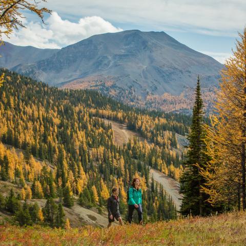 Tombez sous le charme des couleurs spectaculaires de l'automne en Alberta