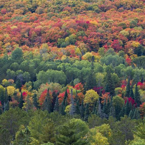 Fall Colours in Canada