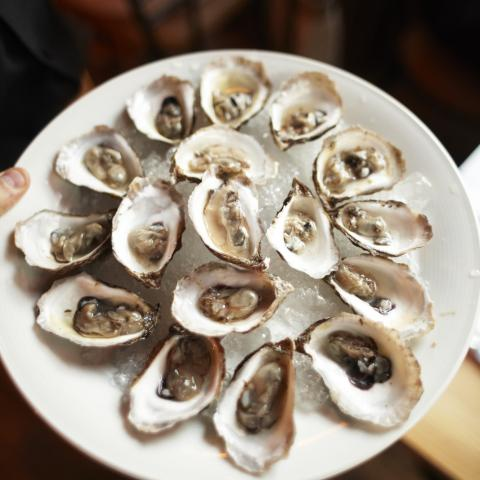 Oysters in Manitoba