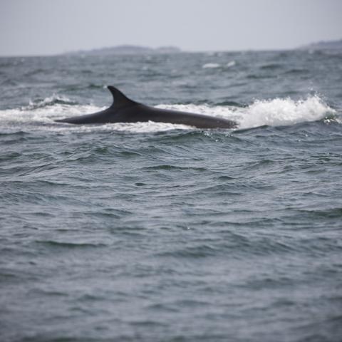 Auf Tuchfühlung mit Walen in New Brunswick