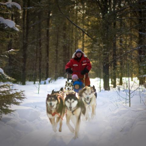 Around Anglin Lake through the boreal forest with Sundog Sled Excursions
