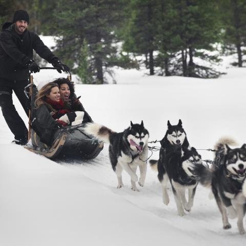 5 remarkable destinations for dogsledding adventures