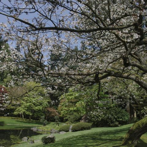 Le Nitobe Memorial Garden de l'Université de la Colombie-Britannique