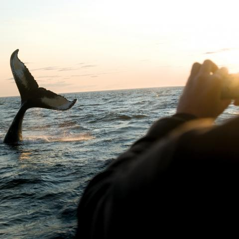 Whale watching off Brier Island