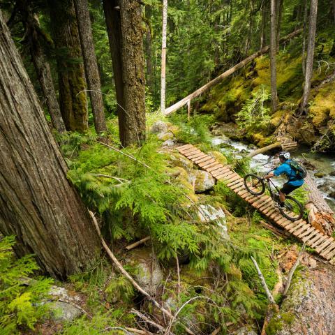 Whistler fall mountain biking