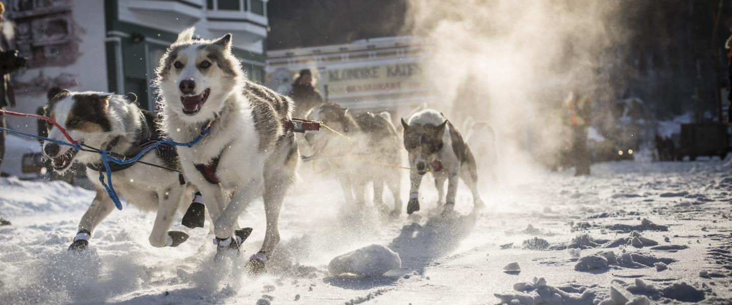 a different way to travel dogsledding in yukon keep exploring