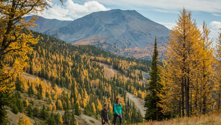 Los mejores lugares para ver los hermosos alerces de Alberta